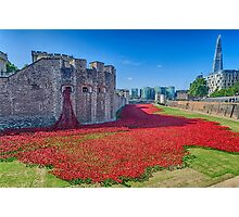 Poppies in the Moat 2 Photographic Print