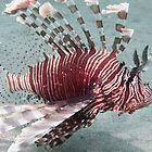 Just another lion fish by johngill