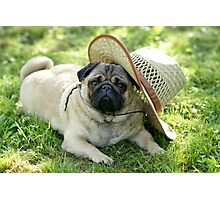 Pug with a hat Photographic Print