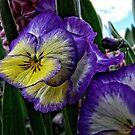 Purple yellow white flower by Wolf Sverak