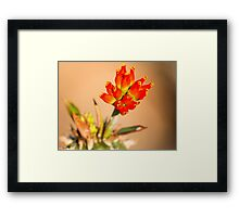 Red Bells Framed Print