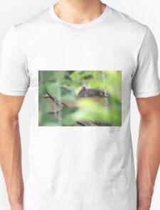 Grey squirrel on garden fence Unisex T-Shirt
