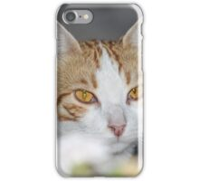 A cat behind the flower iPhone Case/Skin