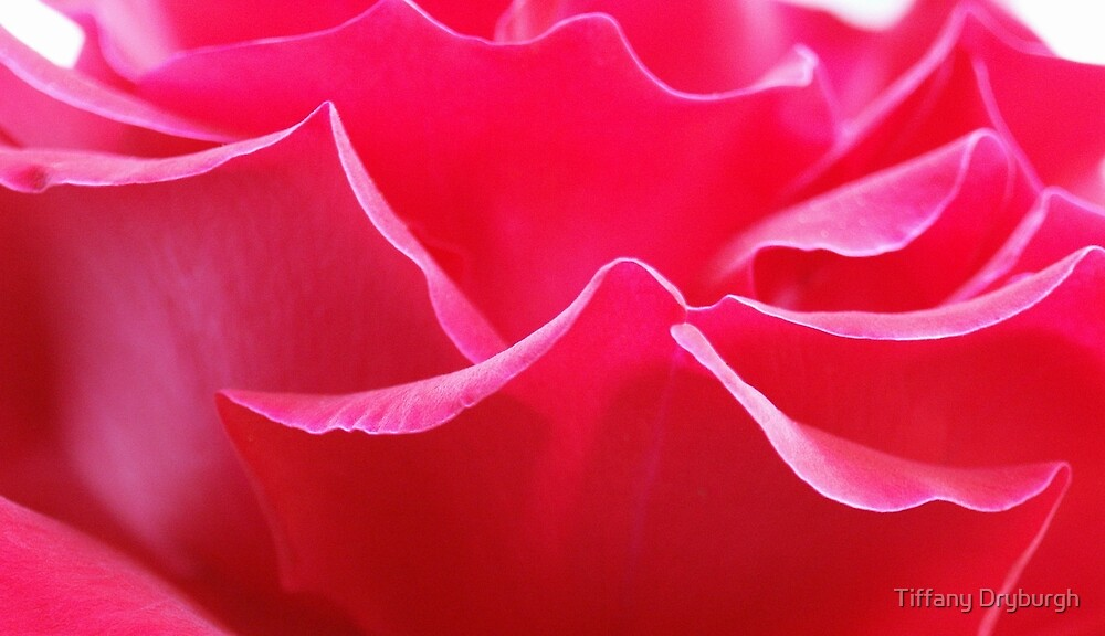 Red Petals by Tiffany Dryburgh