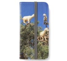 Goats in an argan tree iPhone Wallet/Case/Skin