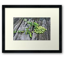 Pea green on boards Framed Print