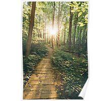 Green & Sunny Walk  Poster