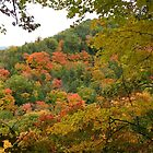 Ontario in the Fall, (Please view large) by AnnDixon