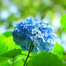 """ Blue Danube "" by Richard Couchman"