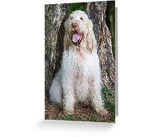 Orange & White Italian Spinone Dog Greeting Card