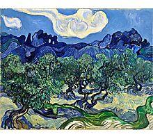 Vincent Van Gogh -  Olive Trees, 1889  Photographic Print