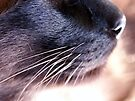 Whiskers by Tiffany Dryburgh