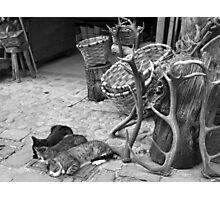 Sleeping cats Photographic Print