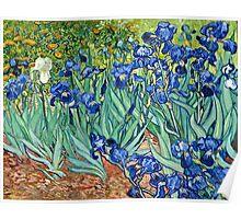 Vincent Van Gogh - Irises, 1889  Poster