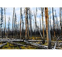 Remains of Forest Fire in Yellowstone National Park Photographic Print