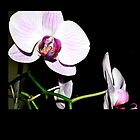 Orchid by Summer Gomes
