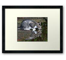 A wildcat reflection ! Framed Print