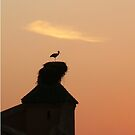 Stork by Jack Howse