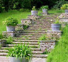Garden Steps by lezvee