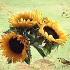 Sun Flowers by Irene  Burdell