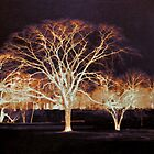 Midnight Glow by SRowe Art