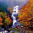 Shooting In the Autumn Rain by Nancy Richard
