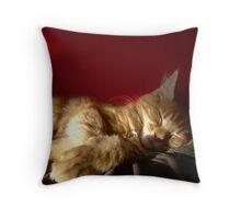 Maine Coon Kitten Sleeping Throw Pillow