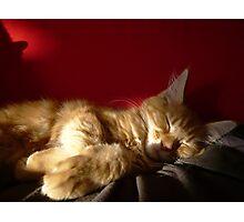 Maine Coon Kitten Sleeping Photographic Print