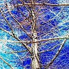 Tangled Web by SRowe Art