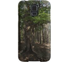 Trail Guardian - an Ancient Beech Tree in a Pine Forest Samsung Galaxy Case/Skin