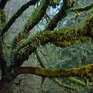 Olympic National Park by Elaine Bawden