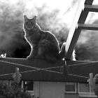 Cat on a Roof by HeklaHekla