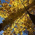 Autumn Shadows Geometry  by Georgia Mizuleva