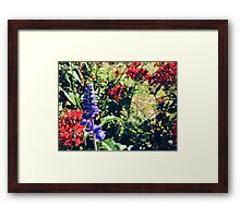 Mealy-Cup Sage among Pentas flowers Framed Print