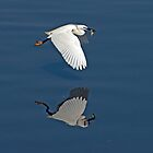 Egret with Fish by DonMc