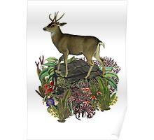 Deer in the woods  Poster