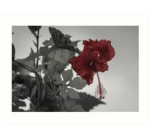 Red Tropical Hibiscus Art Print