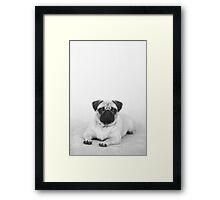 BLACK AND WHITE PUG Framed Print