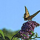 Whimsical Butterfly by MDossat