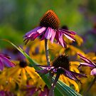 Colors of Summer by Melodie Douglas