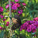 Whimsical Butterfly II by MDossat