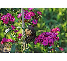 Whimsical Butterfly II Photographic Print