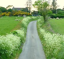 Sheep May Safely Graze by Fara