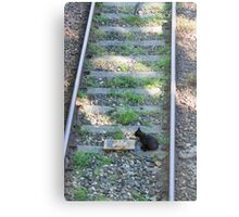 cat on the rails Metal Print