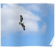 Flight of the Osprey Poster