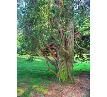 Twisted Tree Photographic Print