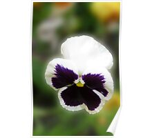 Bright and Cheerful - Pansy Portrait Poster