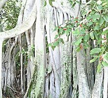 Banyan fence by cliste