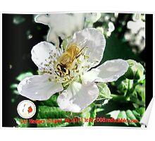 Bee Resort; La Mirada, CA USA  Poster