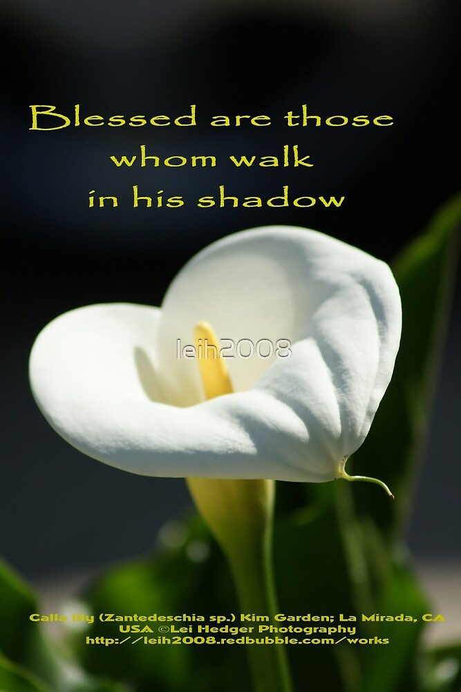 Blessed are those whom walk in his shadow; La Mirada, CA  USA by leih2008